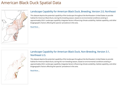 American Black Duck Spatial Data