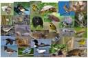Northatlantic Wildlife Species Models