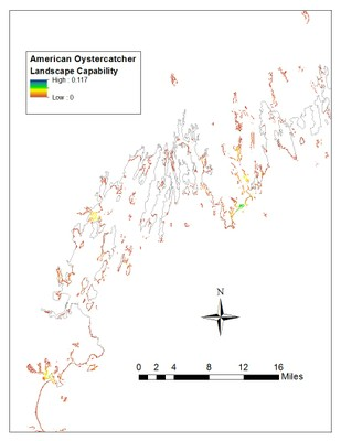 Landscape Capability for American Oystercatcher, Version 3.0, Northeast