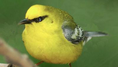 CHJV Linking Populations to Habitats Image