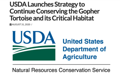 USDA Launches Strategy to Continue Conserving the Gopher Tortoise and its Critical Habitat