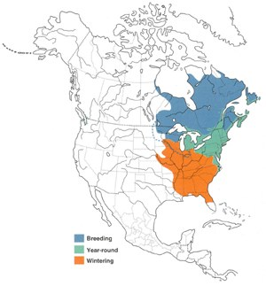Distribution of the American Black Duck