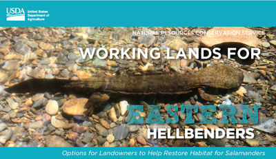 Working Lands for Eastern Hellbenders