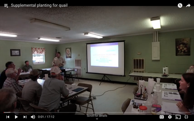 Supplemental planting for quail