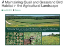Maintaining Quail and Grassland Bird Habitat in the Agricultural Landscape