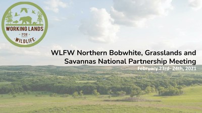 Working Lands for Wildlife (WLFW):  Northern bobwhite, Grasslands and Savannas National Partnership Meeting, Feb 23rd-24th 2021
