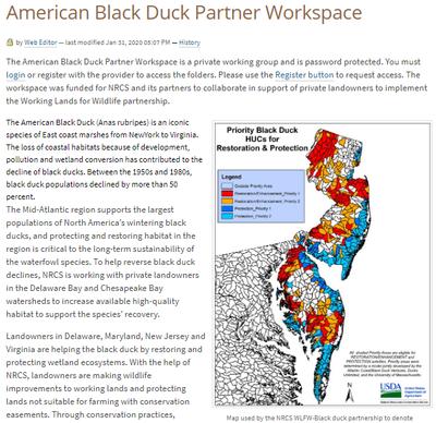 American Black Duck Partner Workspace