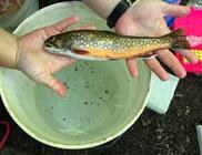 A Race Against the Clock for Brook Trout Conservation