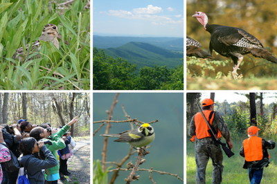 AMJV Partnership Successes for Song Birds and Game Species