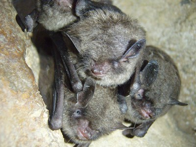 Fish and Wildlife Service, Kentucky Division of Forestry Sign Agreement Protecting Indiana Bats on State Forests
