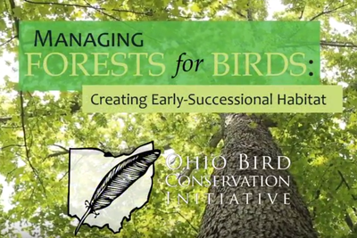 Managing Forests for Birds Video Series