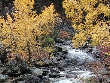 Mountain Streams Offer Climate Refuge