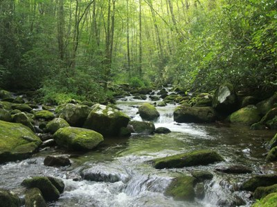 Webinar on Riparian Restoration Tool showcases Appalachian LCC Science
