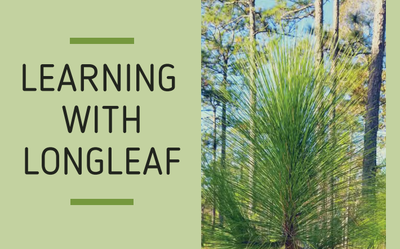 Learning with Longleaf