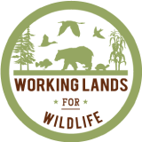 WLFW logo
